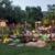 San Diego Pond & Garden