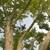 Alpine Tree Services Inc