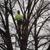 Kottman's Tree Service