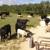 DB Ranch Management