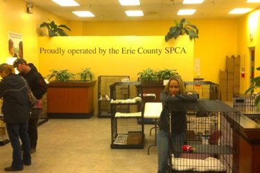 County Spca Erie
