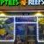 Reptiles N Reefs