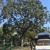 Llamas Tree Service