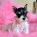 Hollywood Puppies Boutique and Salon