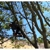 California Tree Solutions