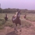 BWA Horse Facility