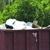Countryside Disposal Inc