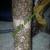Kruti's Henna