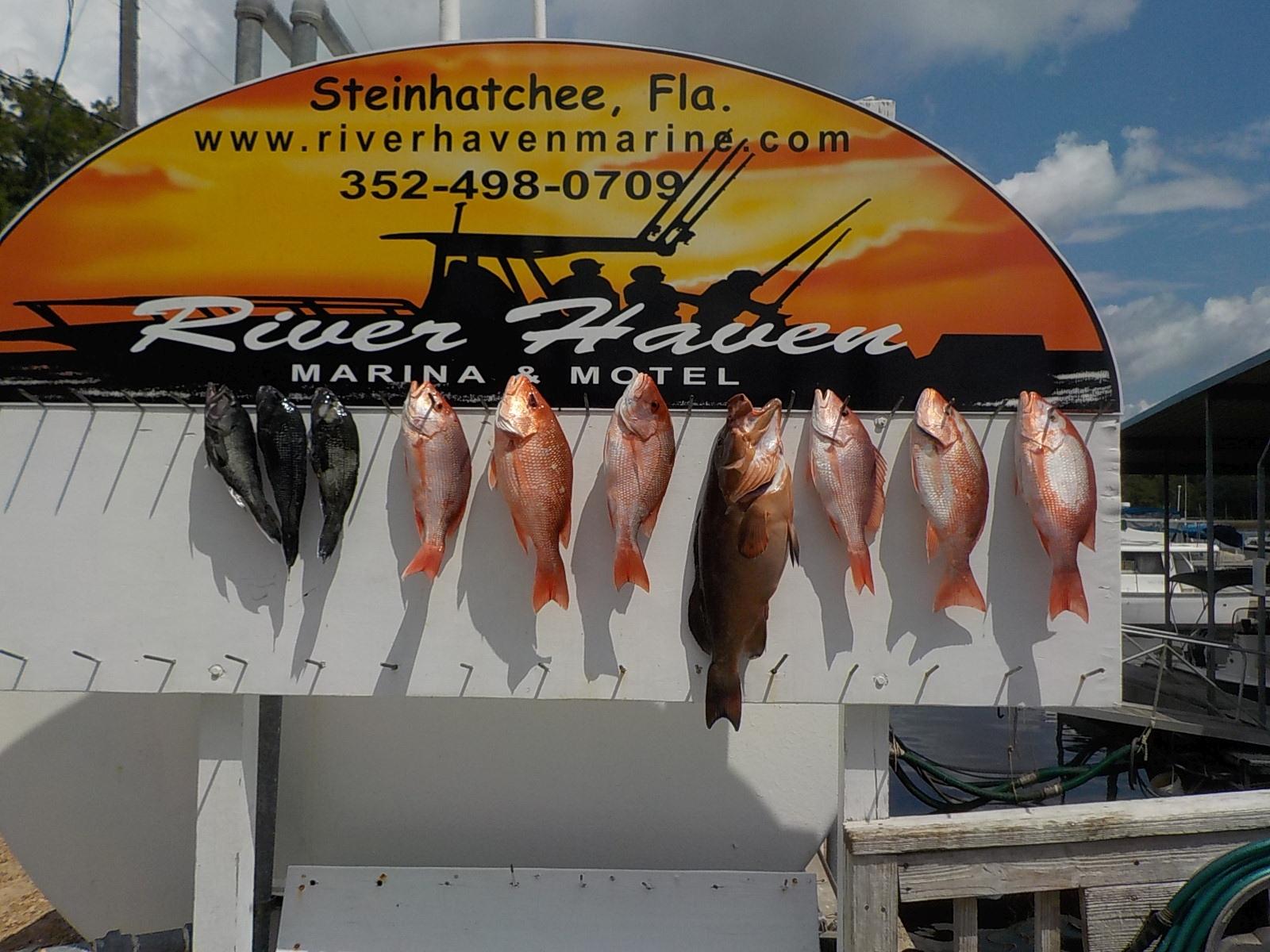 River Haven Marina & Motel, Steinhatchee FL