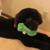 Safe Harbor Pet Boarding & Day Care, Inc.