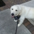 Pampered Pet Dog Walking