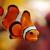 Living Water Aquariums Inc