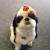 Makepeace Dog Training & Grooming