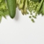 Regency Health Foods Inc