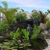 Maui Lawn And Landscape LLC