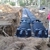 New England Septic & Excavating