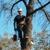 Delbert Johnson Tree & Stump Removal, Inc