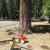 Arbor Green Tree Care