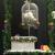 Asheville White Dove Releases