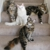 Cold Creek Maine Coon Cats & Kittens