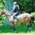 Reddemeade Horse Center