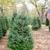 Kelumac Christmas Tree Farm Bed and Breakfast