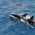 Aloha Key West Dolphin Charter