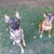 Pet Peeves Training