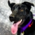 Kentucky Humane Society adoptions at Fern Creek Feeders Supply