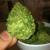 Buy Legal Marijuana Online | Medical Cannabis | Weed For Sale