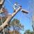 ARBOR TEX TREE SERVICE