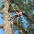 Keith's Tree Service and Firewood-Sherman TX