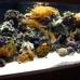 Lone Star Aquariums
