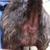Muddy Paws Pet Parlor