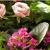 Kiefer's Florist