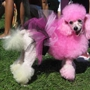 The Exotic Pooch