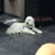 A Yuppy Puppy