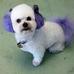 Delightful Doggie Doo's and Kittie Klips Too LLC