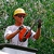 TC's Tree Service