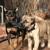 Dog Dandy
