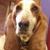 Handsome Hound Dog Grooming
