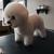 Salon Dog