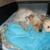 Critter Sitter Pet Services