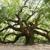 Treescape Inc