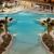 Holiday Inn ORLANDO-DISNEY SPRINGS? AREA