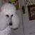 Judee's Canine Salon