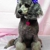 Chiodini's Praise Dogs