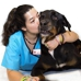 Broward Animal Hospital
