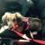 Designer Dog rescue
