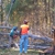 All Season Tree Service